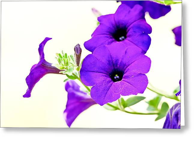 Purple Flowers On Light Background Greeting Card by Edward Myers
