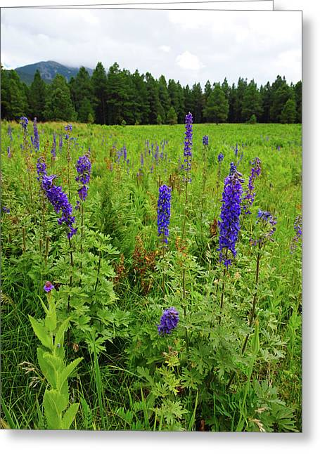 Northern Arizona Greeting Cards - Purple Flowers Greeting Card by Scott Sawyer