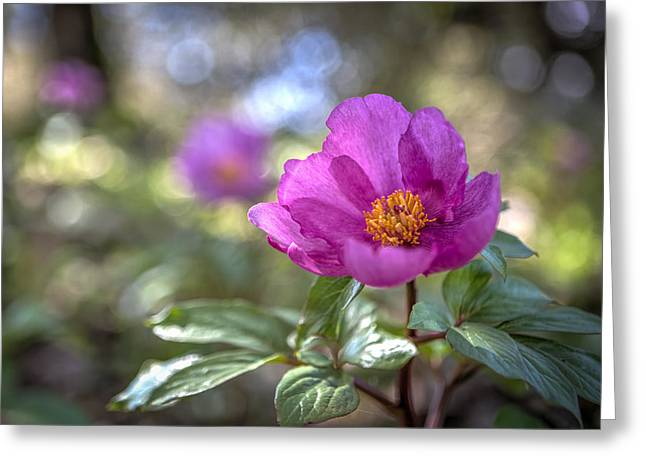 Purple Forest Wild Flower  Greeting Card by Dirk Ercken