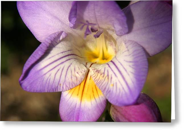 Purple Fresia Flower Greeting Card