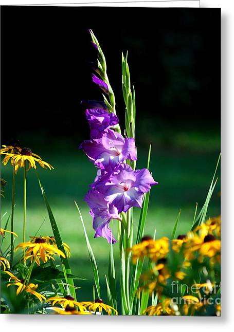 Greeting Card featuring the photograph Purple Glads And Black-eyed Susans by Lila Fisher-Wenzel