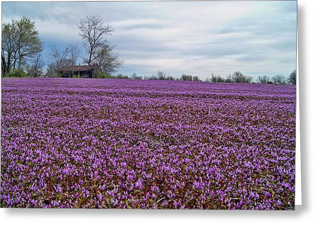 Greeting Card featuring the photograph Purple Haze by Cricket Hackmann