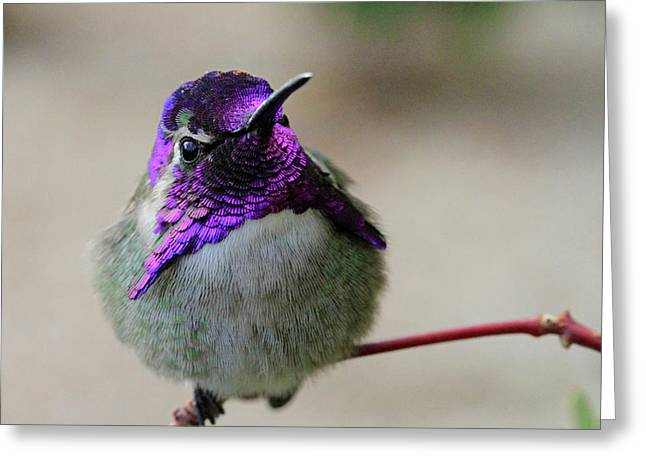 Purple Head Greeting Card