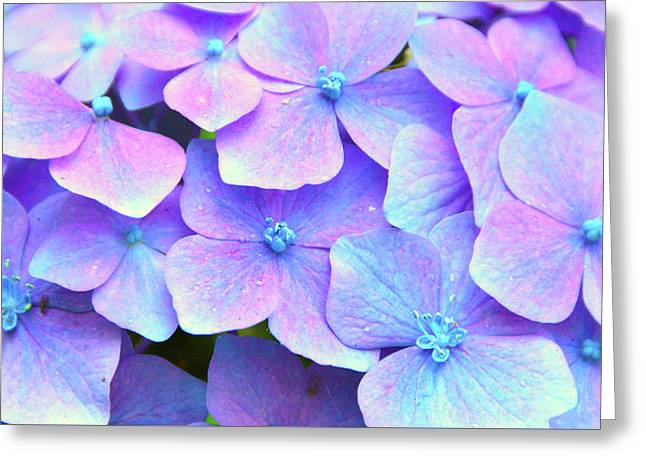 Purple Hydrangeas Greeting Card