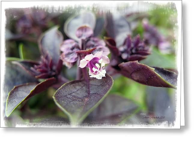 Greeting Card featuring the photograph Purple In Autumn by Joan  Minchak