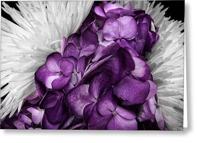 Purple In The White Greeting Card