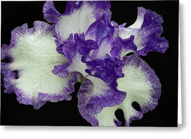 Greeting Card featuring the photograph Purple Iris Frills by Jean Noren