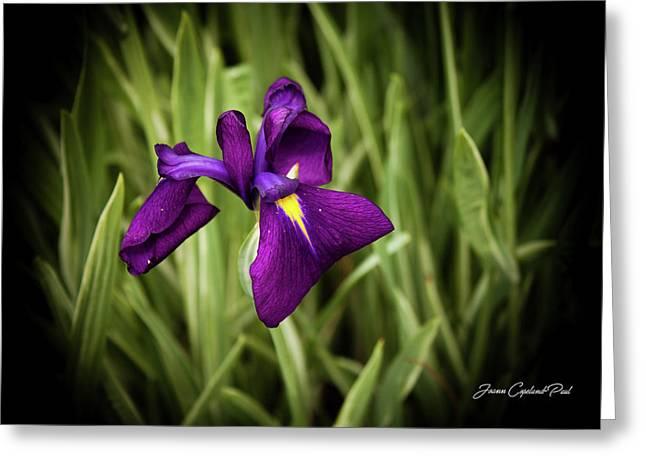Greeting Card featuring the photograph Purple Japanese Iris by Joann Copeland-Paul