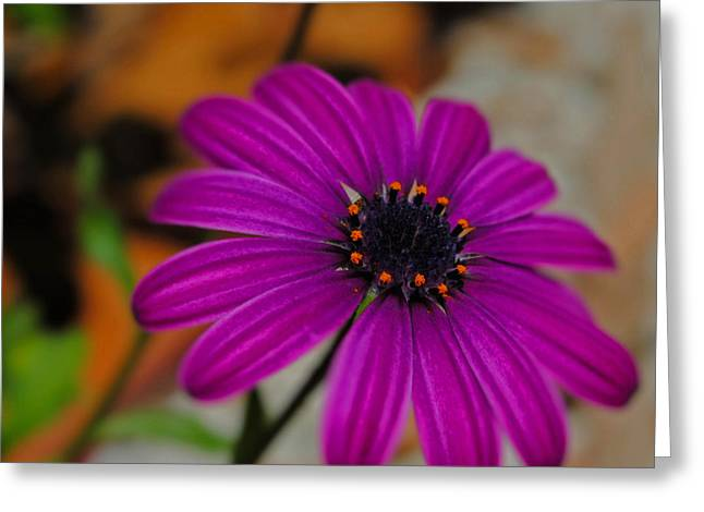 Greeting Card featuring the photograph Purple  by Laura DAddona
