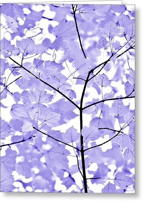 Light And Dark Greeting Cards - Purple Lavender Leaves Melody Greeting Card by Jennie Marie Schell
