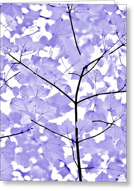 Purple Lavender Leaves Melody Greeting Card by Jennie Marie Schell