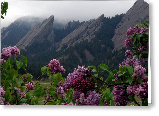 Purple Lilacs Flatirons Greeting Card