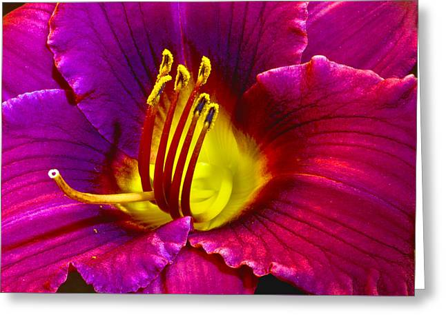 Greeting Card featuring the photograph Purple Lily by Bill Barber
