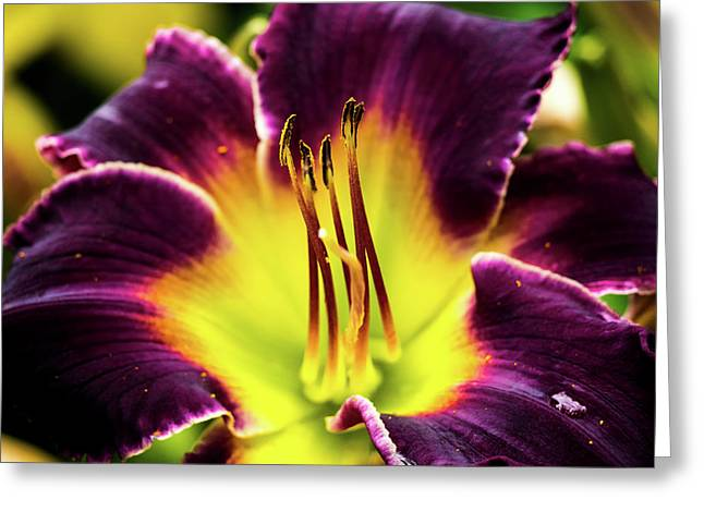Greeting Card featuring the photograph Purple Lily - Close Up by Penny Lisowski