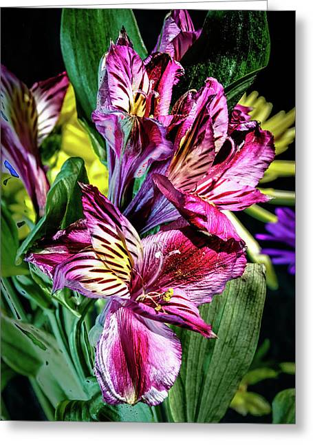 Purple Lily Greeting Card by Mark Dunton