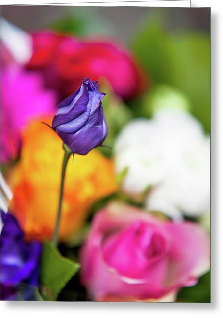 Purple Lisianthus In Colorful Bunch Greeting Card by Jenny Rainbow
