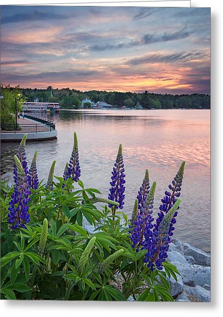 Purple Lupines On The Causeway Greeting Card
