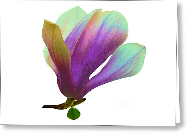 Purple Magnolia Greeting Card