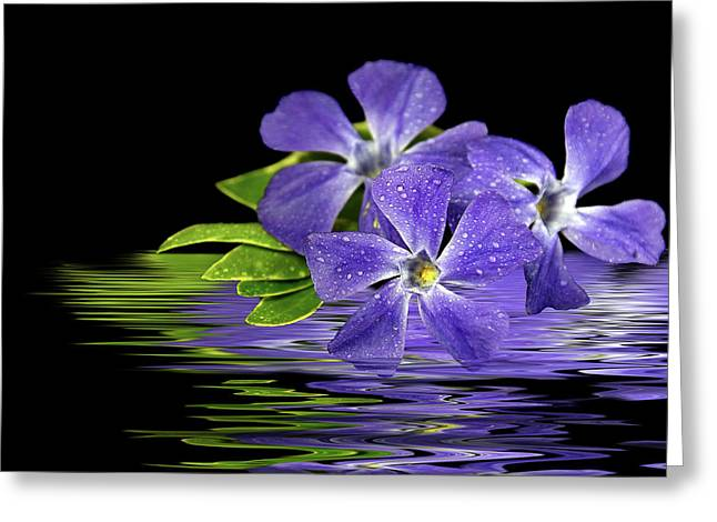 Purple Myrtle Reflection Greeting Card