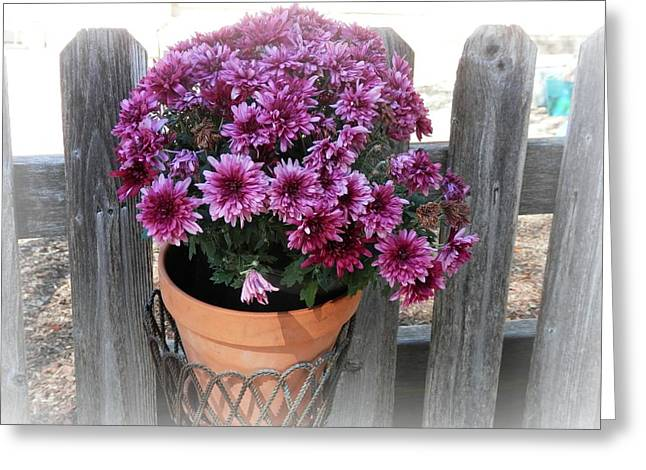 Purple On The Fence Greeting Card