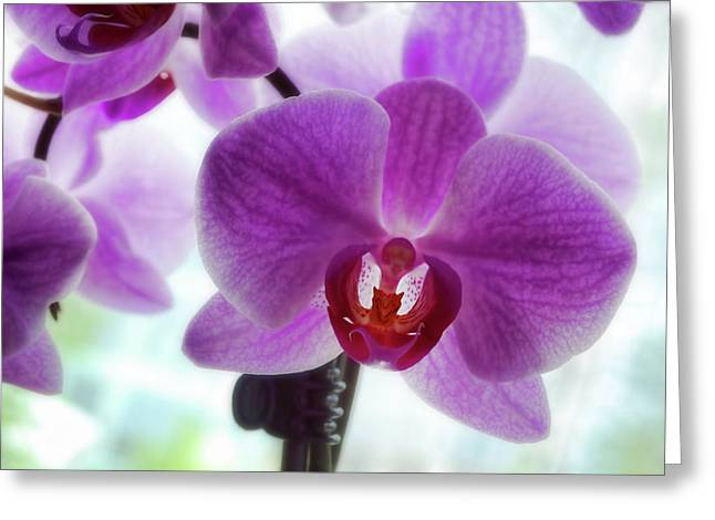 Purple Orchid Greeting Card by Ann Powell