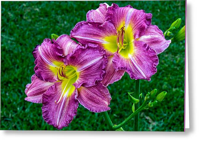 Purple Pair Greeting Card