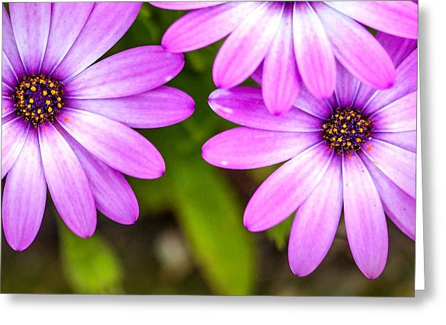 Purple Petals Greeting Card by Az Jackson