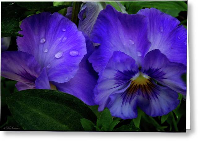 Purple Pansies Greeting Card by Mikki Cucuzzo