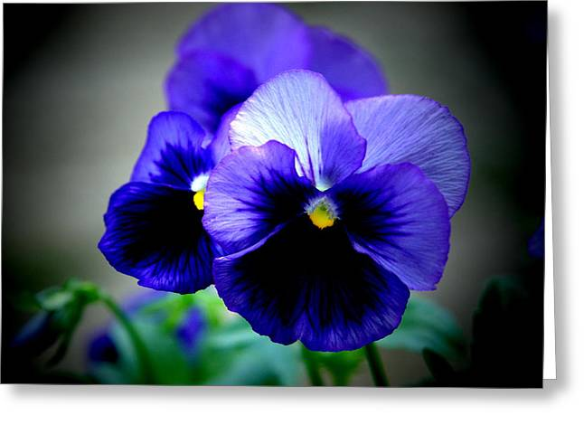 Purple Pansy - 8x10 Greeting Card by B Nelson