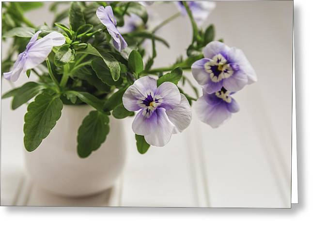 Greeting Card featuring the photograph Purple Pansy Flowers by Kim Hojnacki