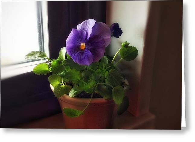 Purple Pansy On My Windowsill Greeting Card