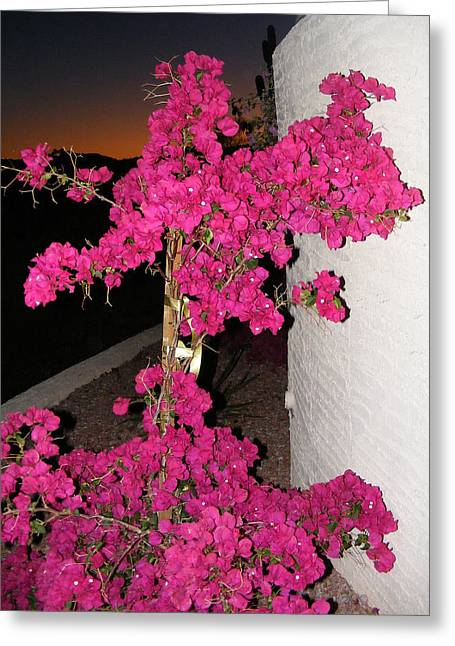 Purple Passion Against Desert Sunset Greeting Card