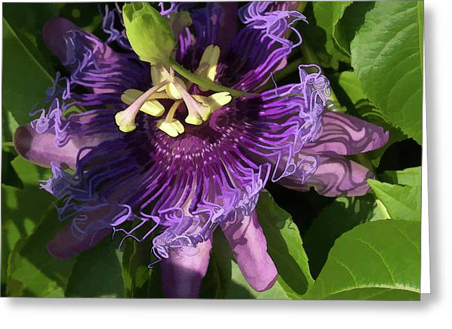 Greeting Card featuring the photograph Purple Passion Flower by Michael Flood