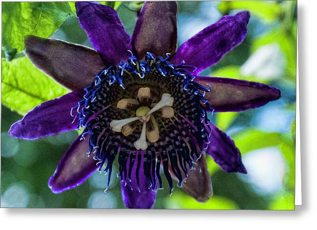 Purple Passion Flower Greeting Card by Phyllis Taylor