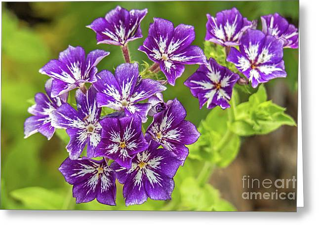 Purple Passion Greeting Card by Kate Brown