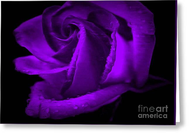 Purple Passion Greeting Card by Krissy Katsimbras