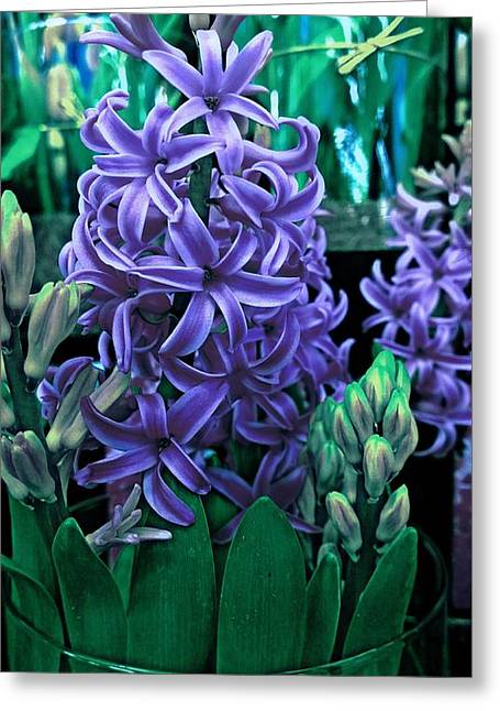 Purple Passion Greeting Card by Levi Wilkinson