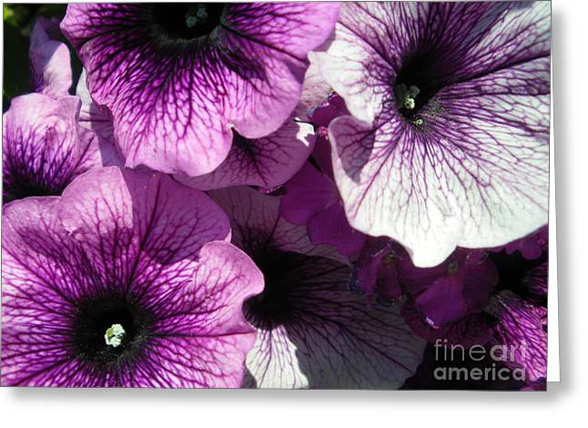 Purple Petunia Paradise Greeting Card