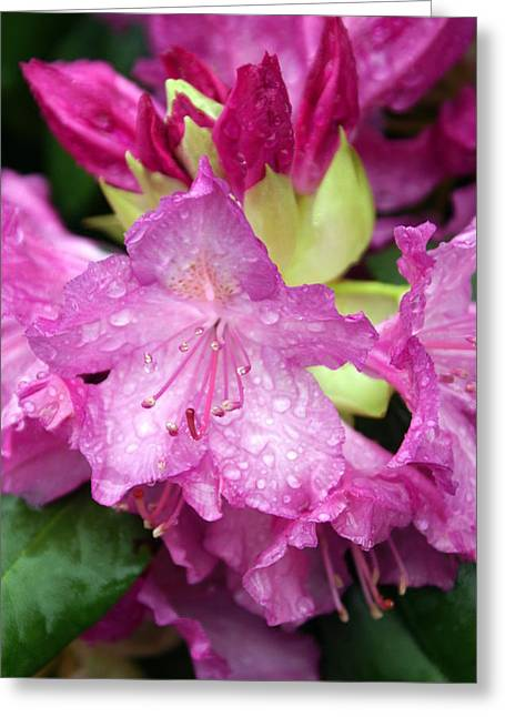 Purple Pink Greeting Card by Marty Koch