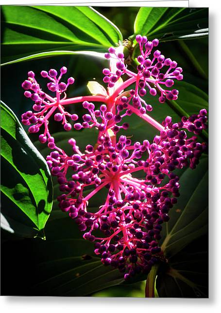 Purple Plant Greeting Card