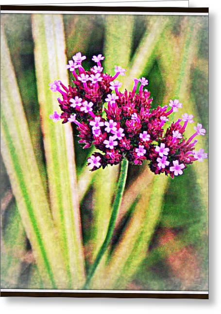Purple Pleasure Greeting Card by Elizabeth Babler