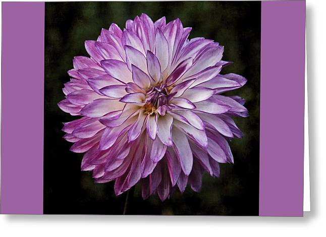 Purple Pom Pom Greeting Card