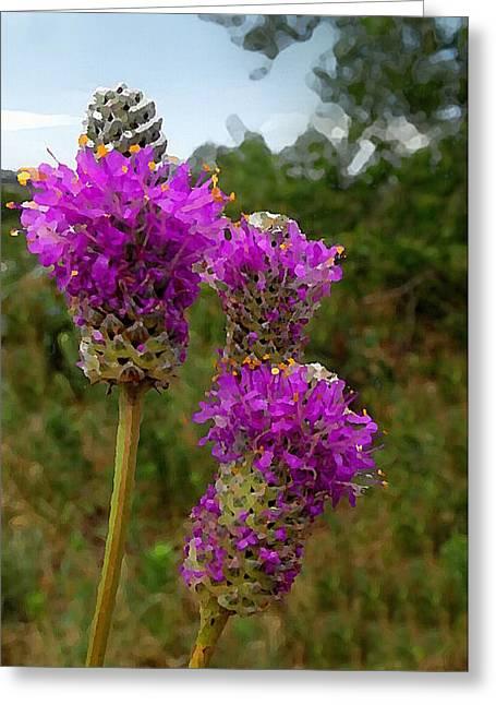 Purple Prairie Clover Greeting Card