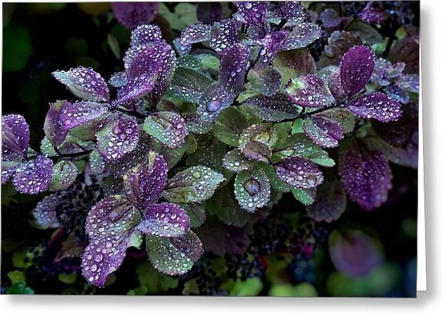 Purple Rain Greeting Card by Kathleen Alhaug