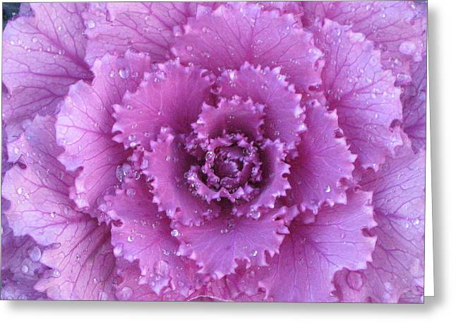 Greeting Card featuring the photograph Purple Rain by Kim Pascu