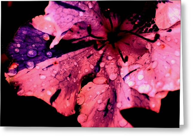 Purple Rain Greeting Card by Trudi Southerland