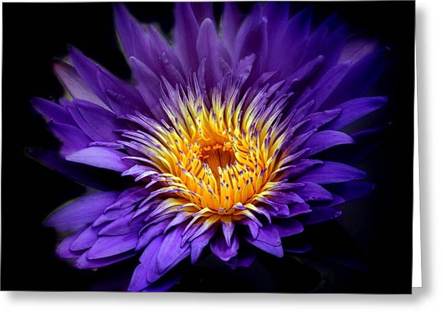 Purple Reign Greeting Card by Jessica Jenney