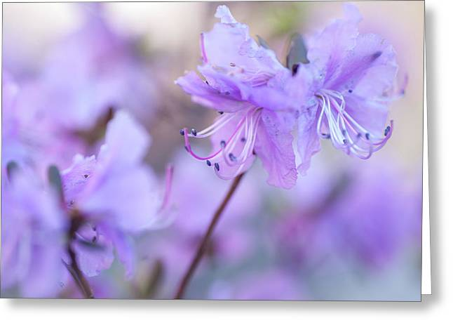 Greeting Card featuring the photograph Purple Rhododendron 1. Spring Watercolors by Jenny Rainbow