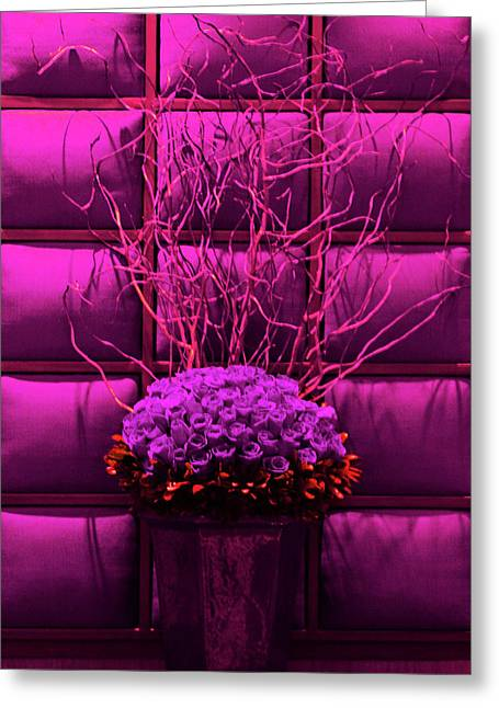 Purple Rose Display Greeting Card by Linda Phelps