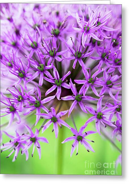 Purple Sensation Greeting Card by Tim Gainey